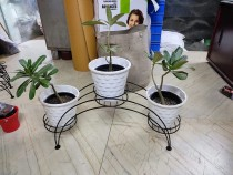 metal plant stand with pot