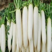 Daikon (mooli) seeds