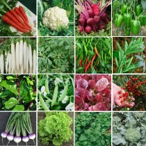 16 Winter Vegetables seeds combo