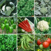 9 Winter Vegetables seeds Combo