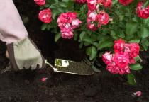 alkarty rose fertilizers 1kg.