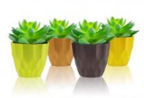Rich Pots for Desk Pots 4 inch
