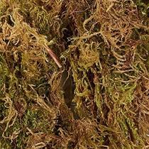 1 kg sphagnum moss grass