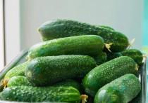 Alkarty Cucumber Seeds