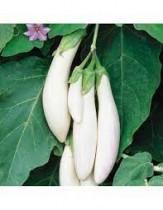 White Long Brinjal Seeds