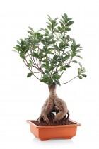 Bonsai 19 inch square pot