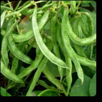 Semphali seeds