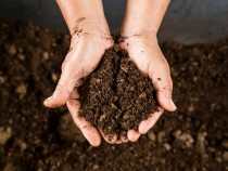 Peat Moss Use for Indoor & Outdoor Plants Hydroponic Seeds Germination  1KG